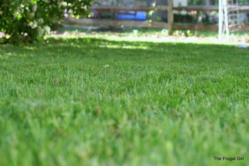 A view of a green lawn, from a low perspective.
