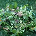 Next year when I garden…