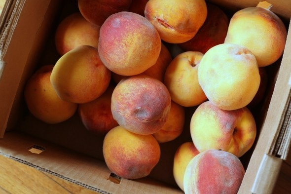 discounted bruised peaches