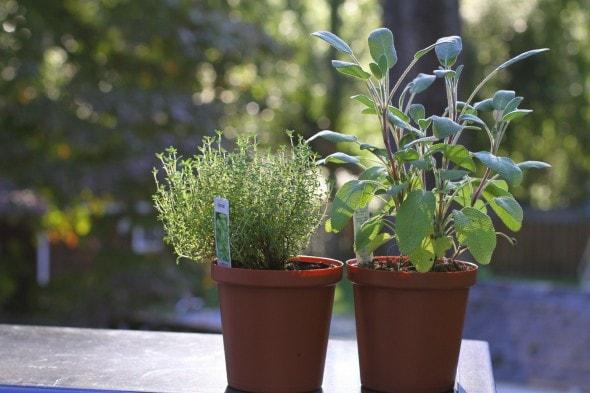 fresh herbs from Aldi