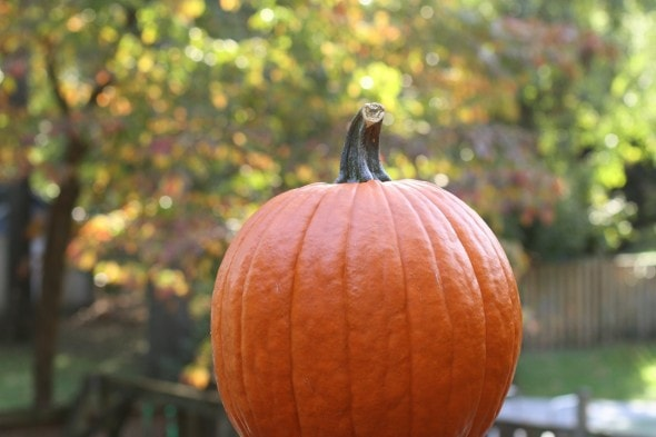 pumpkin with bokeh