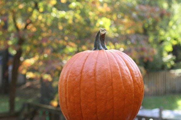 pumpkin with bokeh