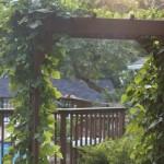 trellis with vines