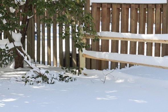 snow on split rail