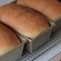 Whole Wheat Yeast Bread