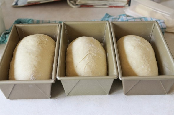 loaves ready to rise