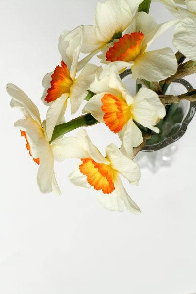 A daffodil bunch on a white background.