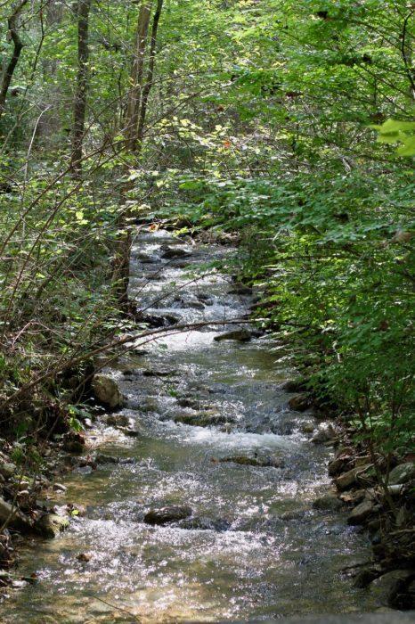 Shenendoah creek