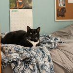 Zoe's got a Saatva mattress. SO FANCY.