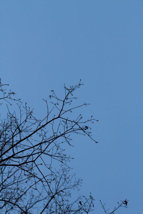 blue dusk sky