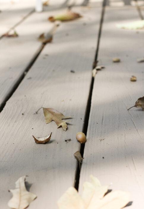acorns on deck