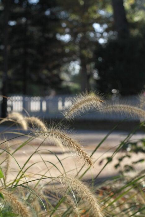Gras in der Morgensonne