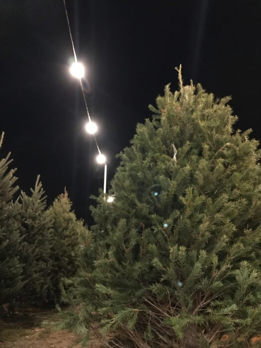 Belanja pohon natal