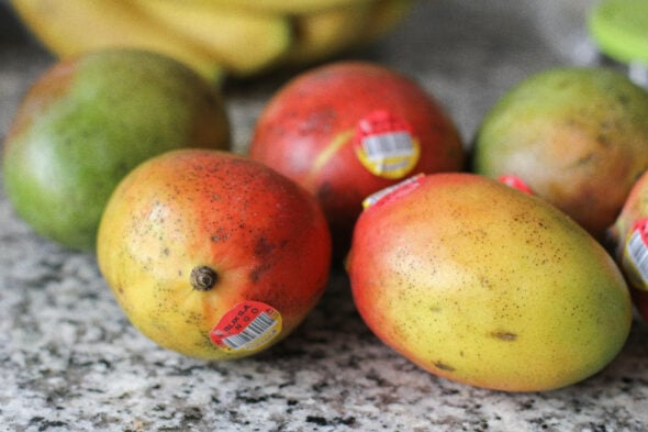 Hungry Harvest mangoes