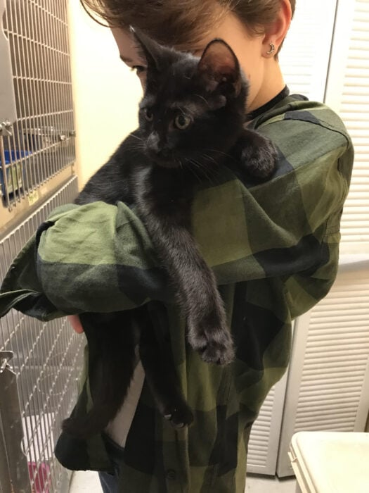 Zoe with a black shelter kitten