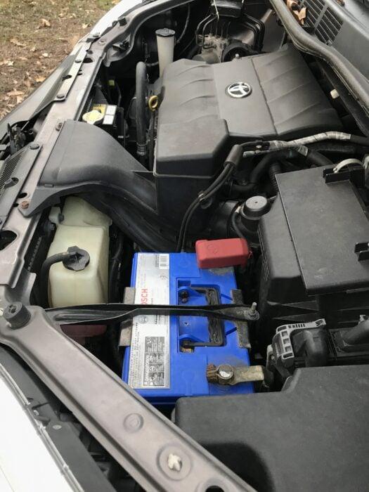 van engine squirrel nest repellent