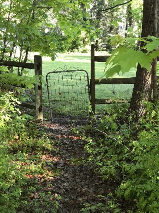 gate in the woods