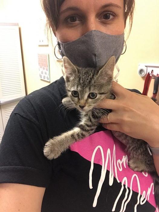 kitten from the cat shelter