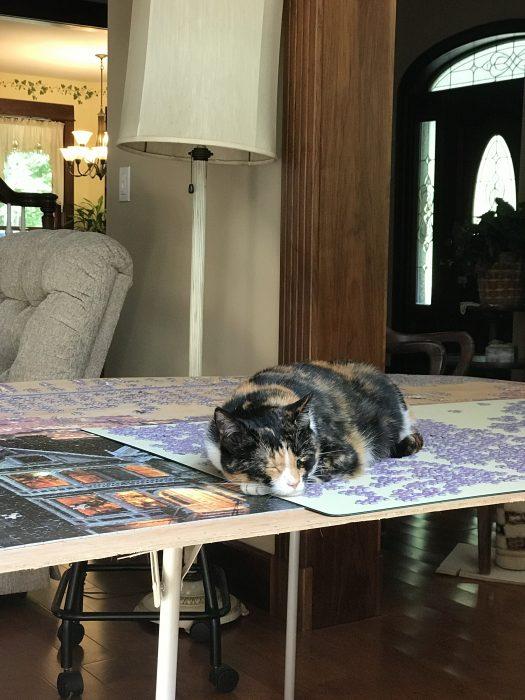 Calico cat sleeping on puzzle