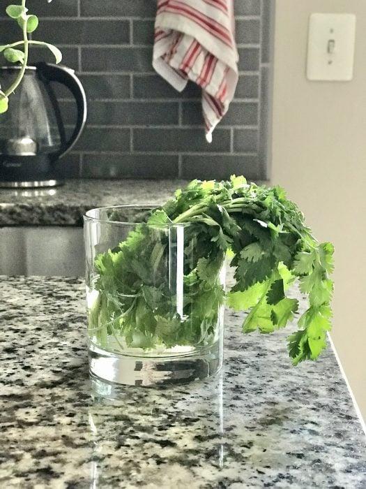 wilted cilantro