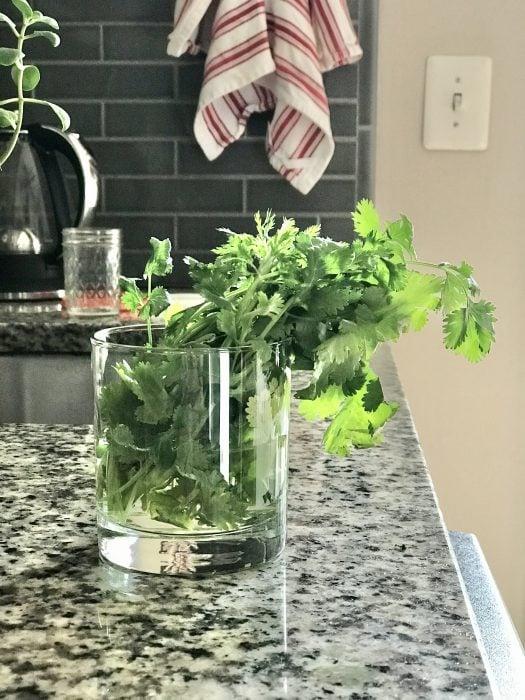 revived cilantro