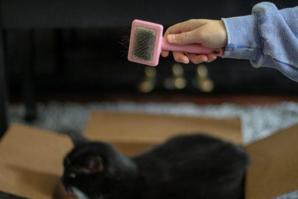 cat hair brush
