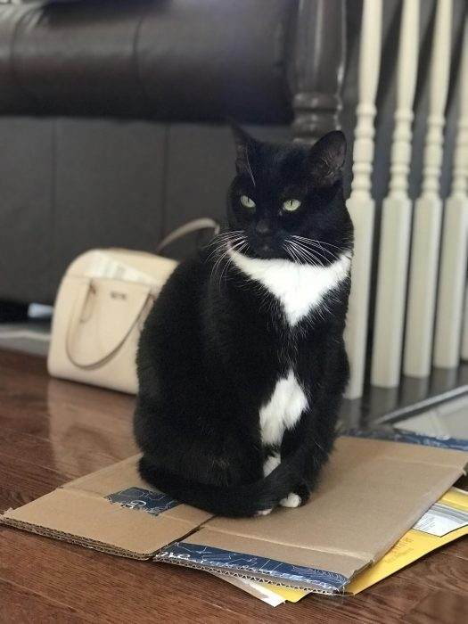cat sitting on cardboard