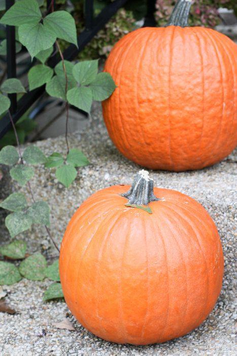 Aldi carving pumpkins