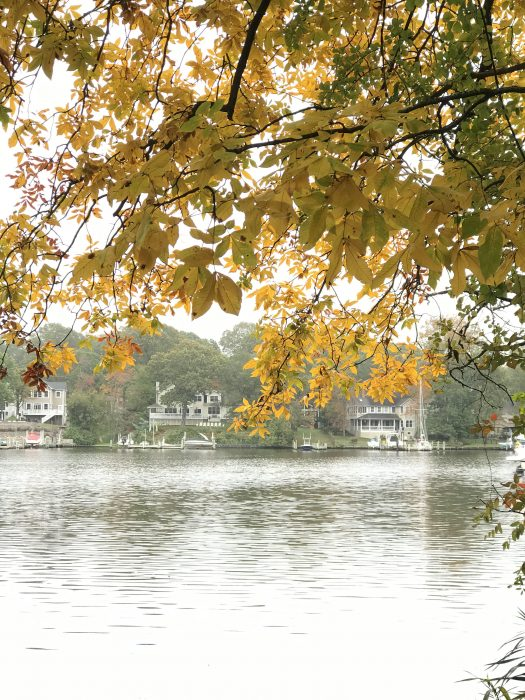 Yellow October leaves by the river
