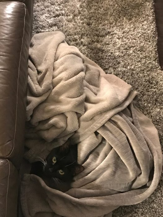 cat in blanket