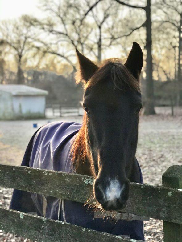 horse wearing a winter blanket