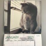 cat calendar from Aldi