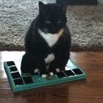 cat sitting on advent calendar
