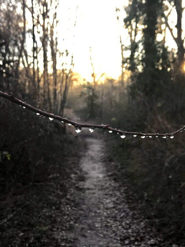 raindrops on winter branch