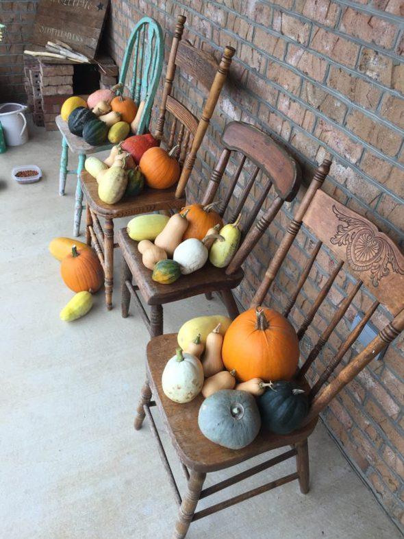home-grown pumpkins