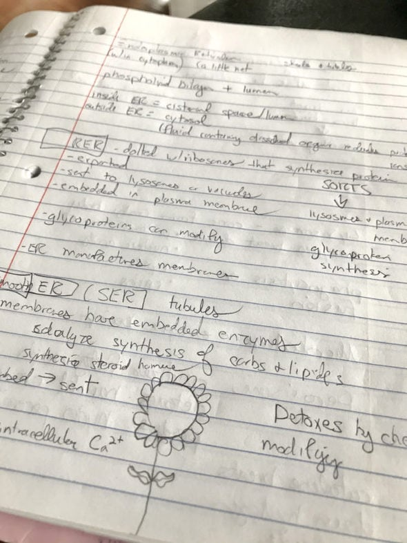 handwritten biology notes.