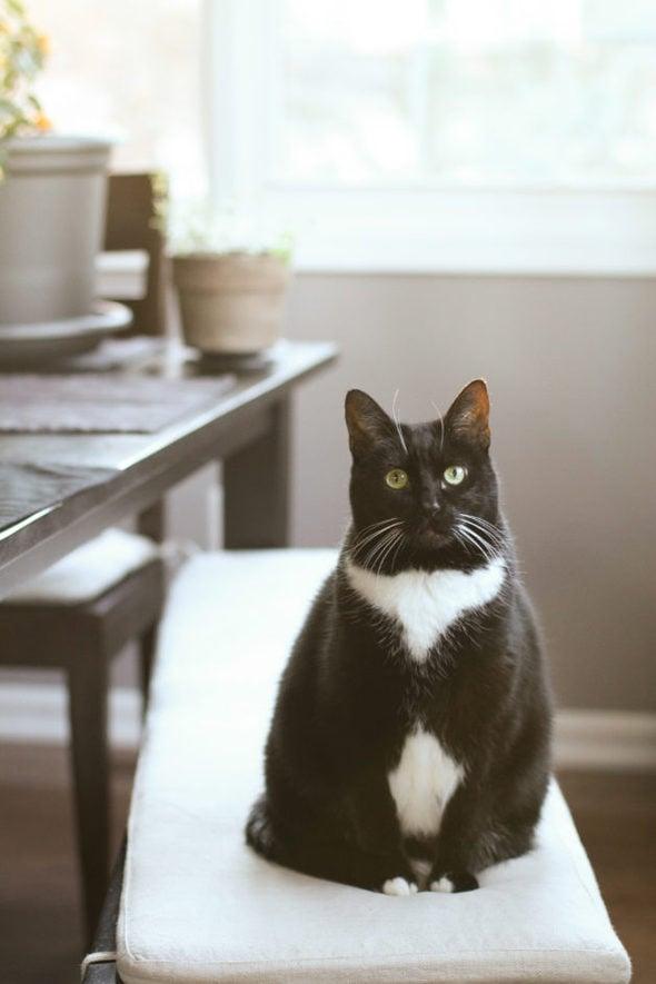 Tuxedo cat sitting on bench