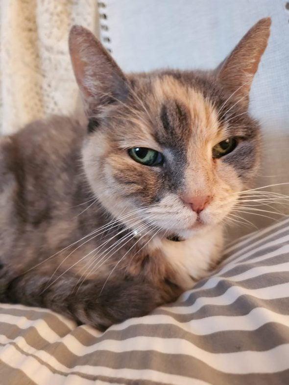 Rose's cat.