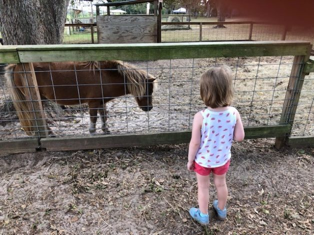 child visiting a farm.
