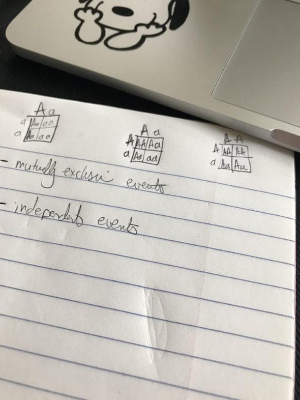 Punnett squares written in a notebook