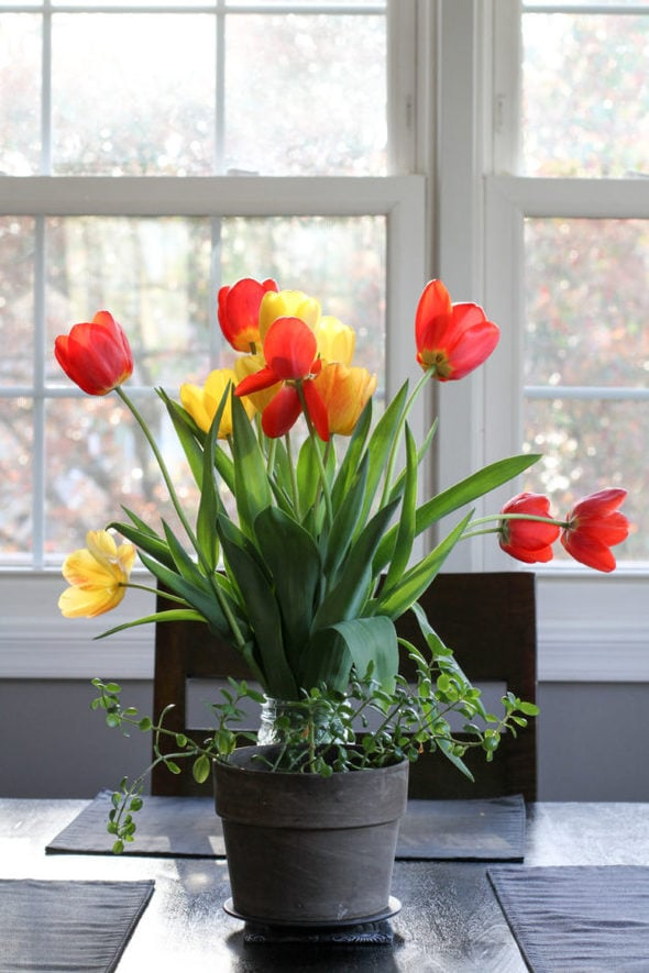 Red and yellow tulips in a mason jar.