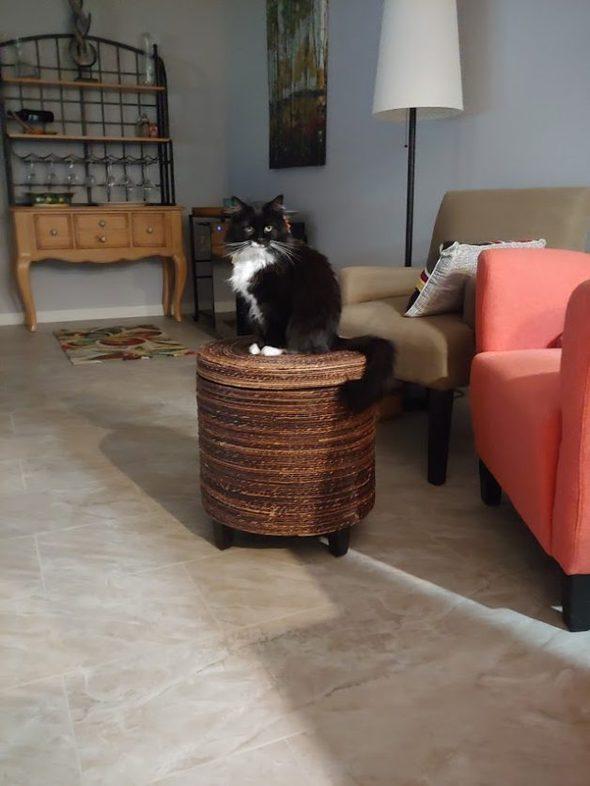 Black tuxedo cat on a stool.