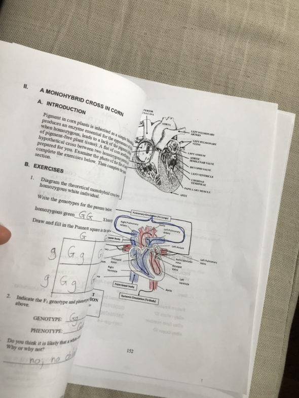 two pages of biology homework.