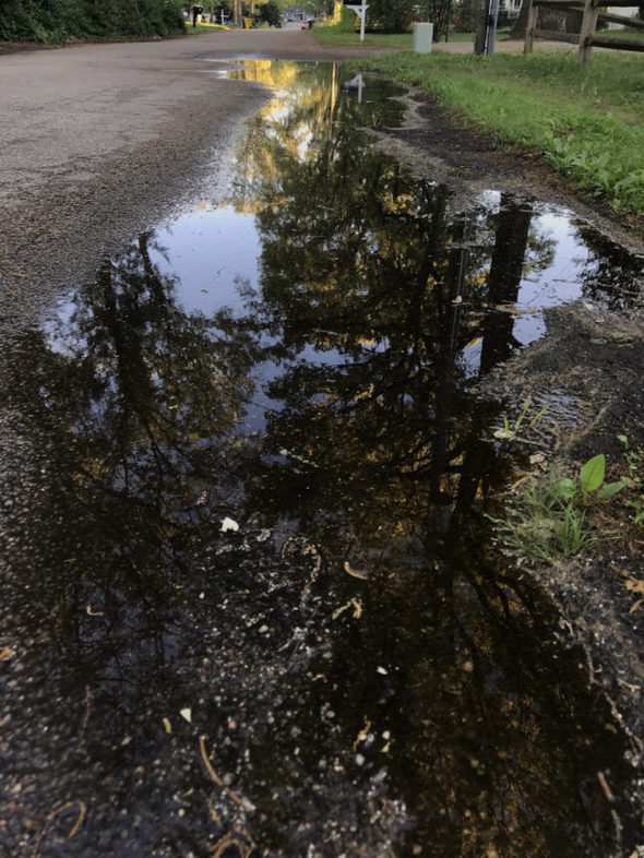 Rain puddle with trees reflected in it.