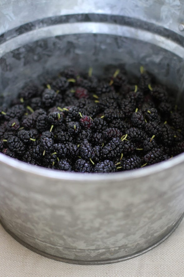 A metal bucket filled with mulberries, viewed from the side.