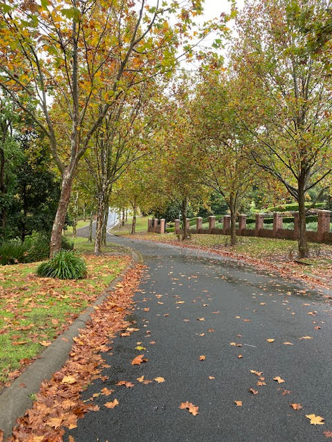 An Australian street in the fall.