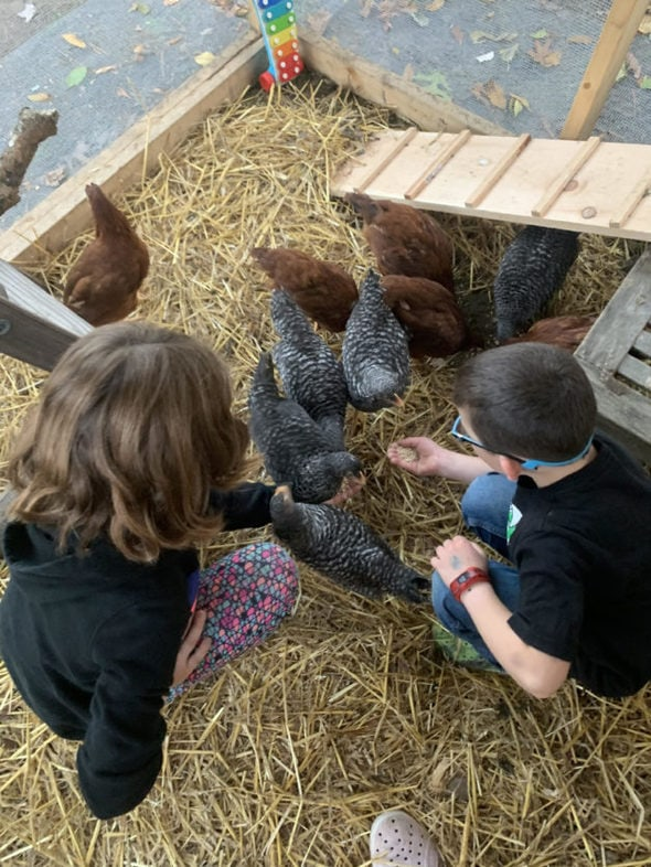Barrie's children with their chickens.