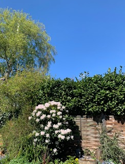 Blue sky above a garden.