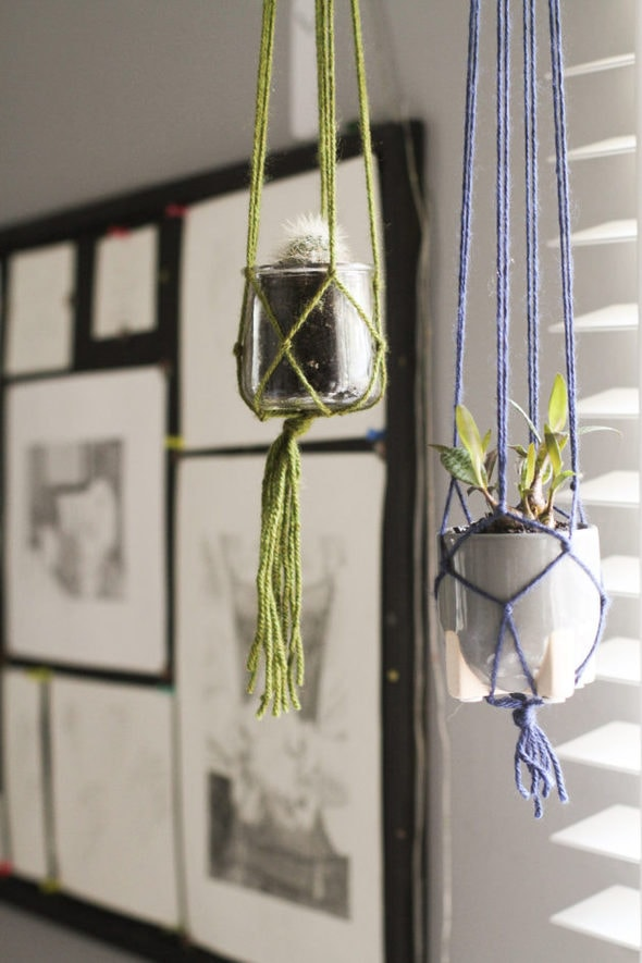 Cactus in a hanging macrame holder.