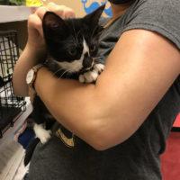 tuxedo cat in Kristen's arms.